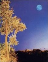 """Mirko Colombo """"Paesaggio con luna"""" - Premio Elaborazione"""