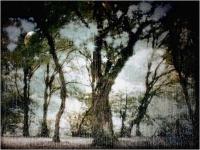 """Emanuele Mazzi """"Piove"""" - Premio Speciale Natura"""