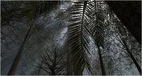 "Marco Ricci ""Deep forest"" - Sez. Immagini di Sintesi 3° Premio ex-aequo"