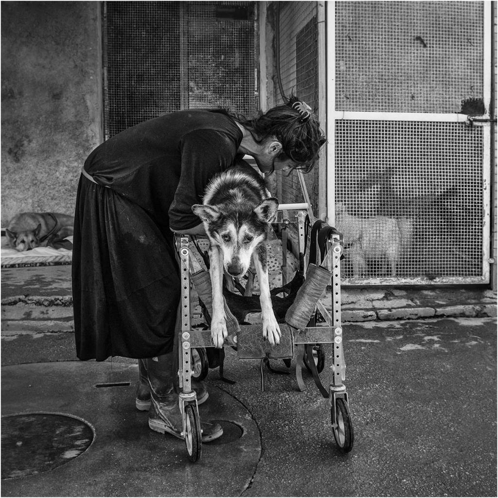 "Elena Bacchi ""Il rifugio 5"" - Sez. RRSP Premio ex-aequo"