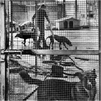 "Elena Bacchi ""Il rifugio 1"" - Sez. RRSP Premio ex-aequo"