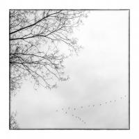 Agosta Davide - In the sky