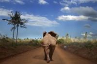 Cencini Carlo - Lungo le strade della Tanzania