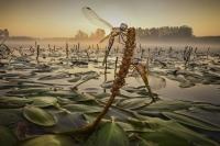 Ghizzi Panizza Alberto - Il risveglio delle libellule