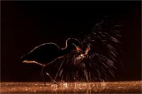 "Ramella Milo Angelo ""Firework"""