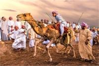 "Montini Giulio ""Camel race 2"""
