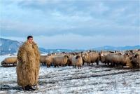 "Zagolin Sandra ""The shepherd"""