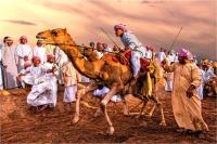 """Giulio Montini """"Camel race 2"""" - Sez. IP Colore Premio ex-aequo"""