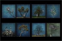 """Signorini Anna """"Come alberi (2019)"""""""