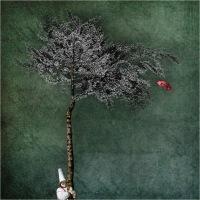 """Signorini Anna """"Come alberi 8 (2019)"""""""