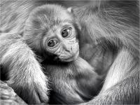 "Brega Giulio ""Little monkey (2018)"""