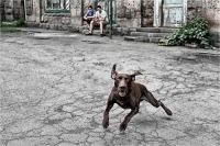 "Monchi Silvano ""Cane mordace (2018)"""
