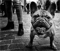 """Borella Aurelio """"Dogs 1 (2018)"""""""