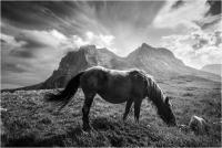 "Cimini Michele ""Wild horse"" (2020)"