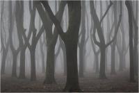 """Battagliarini Paola Edda Nilla """"Atmosfere sospese 1 - un parco in inverno"""" (2020)"""