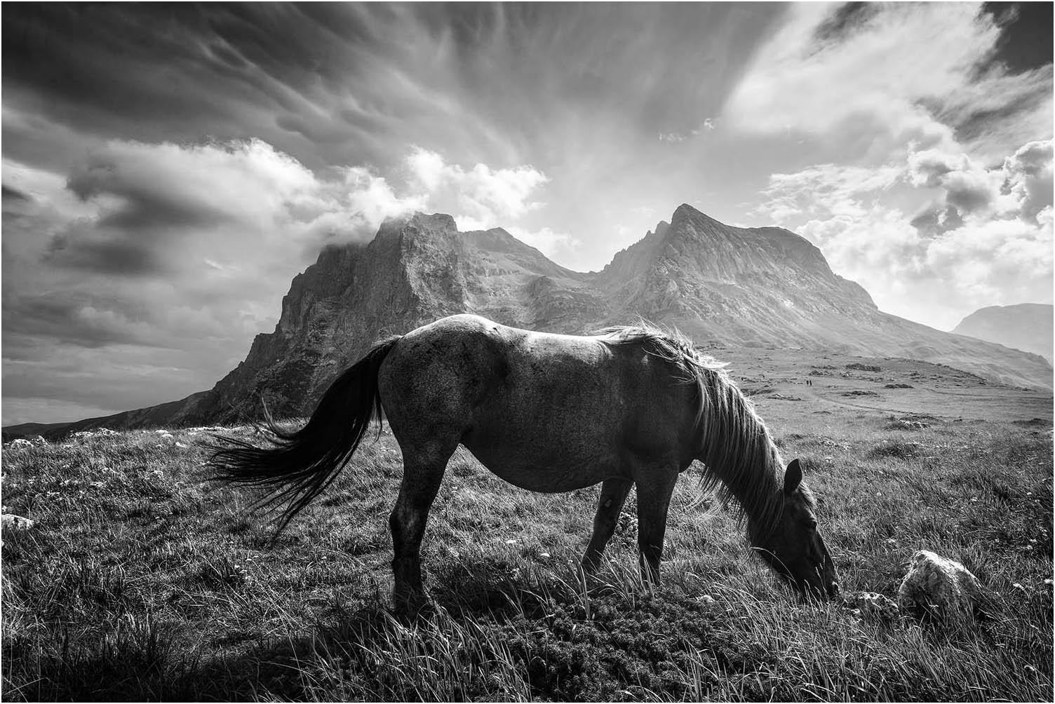 "Cimini Michele ""Wild horse"" (2020) - Sez. IP (BN)"